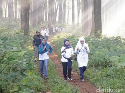 Banyuwangi Gombengsari Plantation Run 2019 Diramaikan Ribuan Pelari