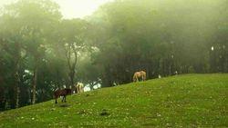 Tempat Paling Romantis di Timor Tengah Selatan