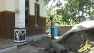 Cerita Warga Pasuruan yang Geli Rumahnya Diserbu Ulat Bulu
