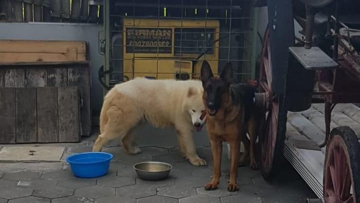 Anjing yang menggigit bocah 6 tahun di Sleman. (Foto: Dok Michael Raymond)