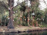 Namanya Pulau Isla de las Munecas. Biasa pula disebut sebagai Pulau Boneka Meksiko, merujuk pada wilayahnya di Xochimilco, Meksiko. (Foto: Dok. www.isladelasmunecas.com)