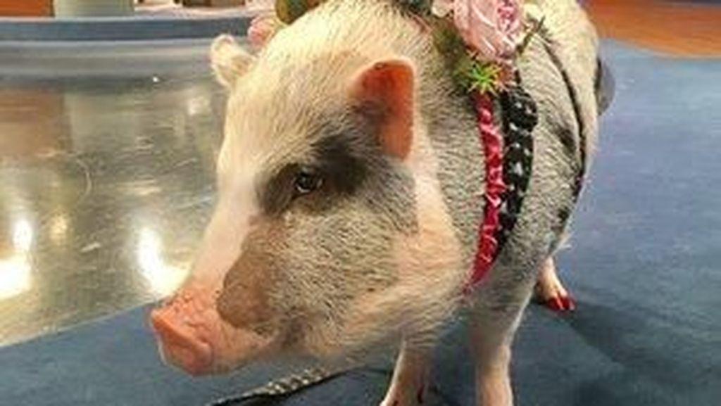 Foto: Babi, Sayur dan Aneka Fasilitas Bandara yang Aneh