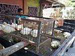 Rugi Rp 50 Juta Tiap Panen, Peternak Ayam di Blitar Siap Gulung Tikar