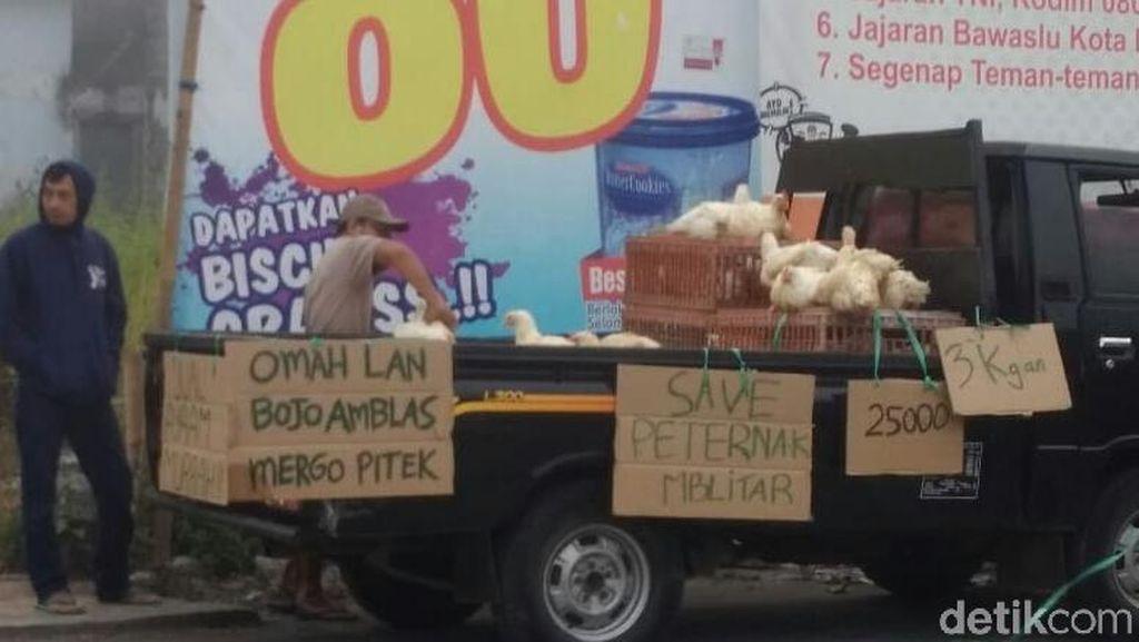 Peternak Ayam di Blitar Obral Hewan Ternak, Ini Alasannya