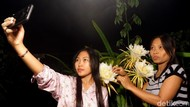 Berburu Foto Instagramable di Kebun Buah Naga Pada Malam Hari