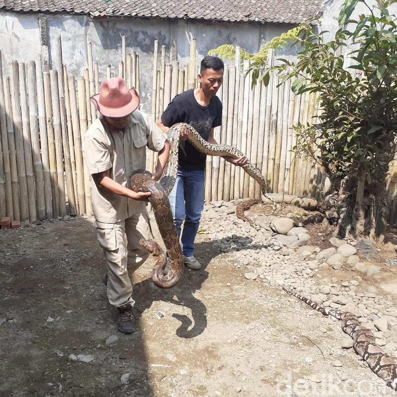 Mengintip Rumah Ular Milik Steve Ewon di Bandung Barat