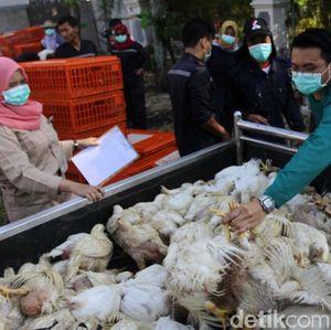 Harga Ayam Anjlok, Ini Penjelasan Kemendag