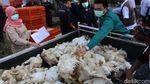 Duh! Harga Ayam Anjlok, Peternak Pilih Bagi-bagi Gratis