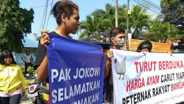 Peternak di Yogyakarta protes harga ayam anjlok