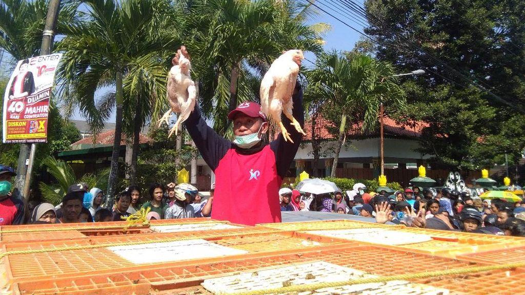 Bagi-bagi Ayam Gratis, Peternak: Daripada Rugi Dipikul Sendiri