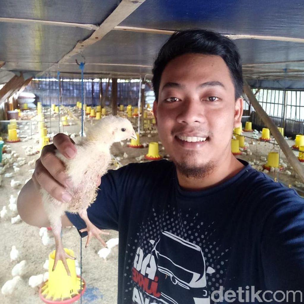 Peternak di Kediri Pilih Bagikan Ribuan Ayam ke Warga Karena Faktor Ini