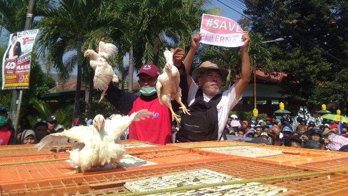 Peternak di Yogyakarta protes harga ayam anjlok/Foto: Usman Hadi/detikcom