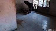 Dinsos Pastikan Tangani 2 ODGJ di Bandung yang Dirantai Keluarga