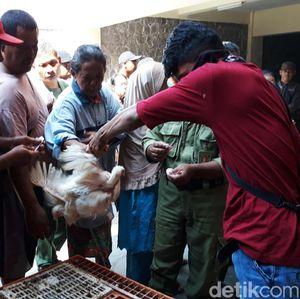 Pengumuman! Ayam Pejantan Dijual Murah