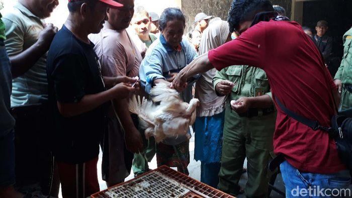 Ribuan ekor ayam dibagikan gratis di sejumlah titik di Kota Semarang. Warga pun menyerbu lokasi pembagian sejak pagi.