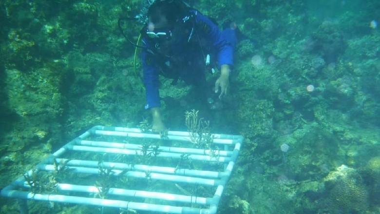 Penanaman terumbu karang oleh polisi Bima (dok Kasubbag Humas Polres Bima)