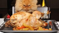 Ekspresi Kocak Saat Kucing Curi Makanan Ini Bikin Gemas dan Ngakak