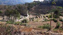 Nestapa Kawasan Tadah Hujan, Ribuan Petani Gunungkidul Gagal Panen