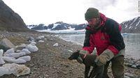 Rubah Arktik yang dipasangi pemancar satelit (CNN)