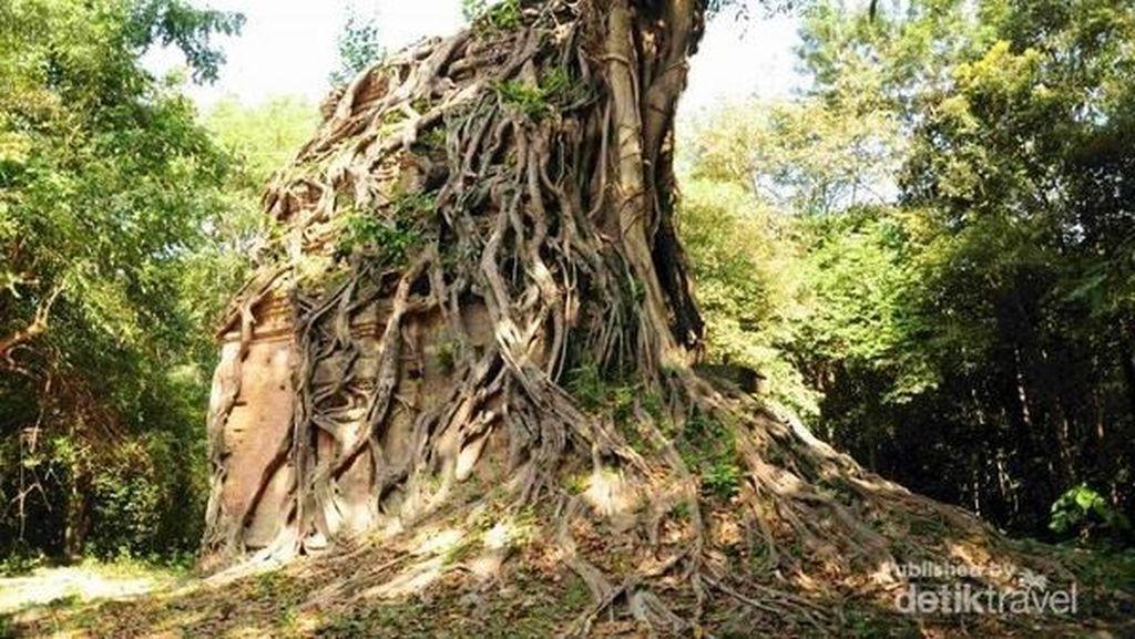 Candi Tua Berlilitkan Pohon yang Misterius