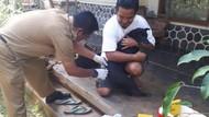 Antisipasi Rabies, 80 Kucing-Anjing di Kertabumi Ciamis Divaksin
