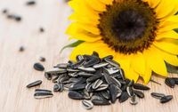 Selain Chia Seed, Bijian Ini Juga Bisa Picu Metabolisme Tubuh