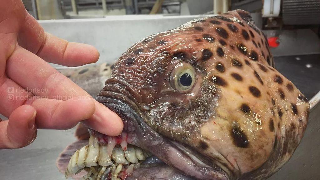 Ikan Bentuk Monster hingga Kisah Hukuman Monyet Pencuri Durian