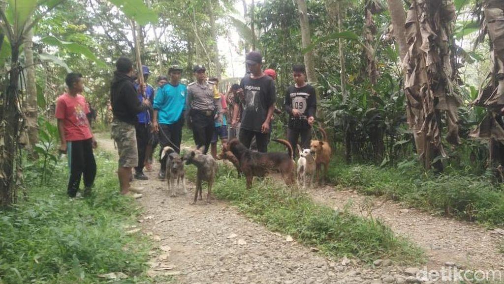 Biar Cepat Tertangkap, Warga Persempit Gerak Babi Hutan