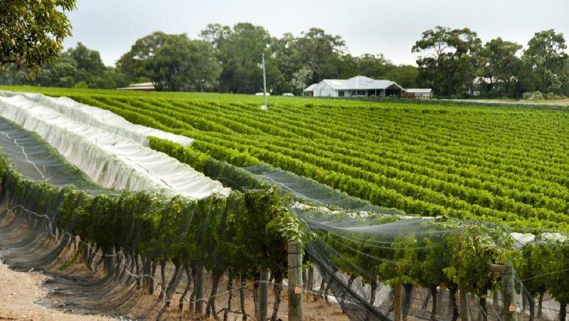Adalah Lonely Planet yang mengeluarkan daftar tahun ini. Margareth River, Australia Barat, Australia meraih posisi pertama dalam daftar ini karena memiliki alam yang memukau hingga lokasi perkebunan anggurnya (iStock)
