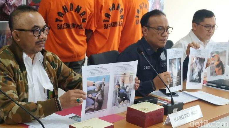 Polri Tangkap Penjual Kanguru hingga Beruang Madu Via Online