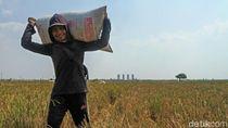 DPR Sebut Sektor Pertanian RI Makin Sistematis dan Tepat Sasaran