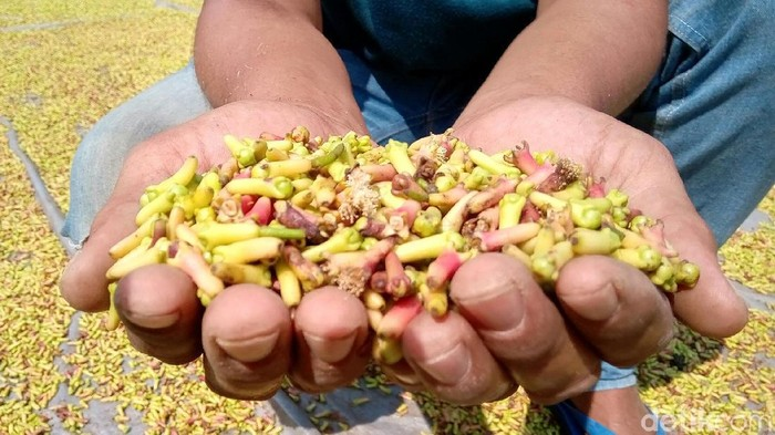 Harga cengkih di Kabupaten Purworejo, Jawa Tengah merosot dalam beberapa minggu terakhir. Petani pun mengeluh dan berharap harga bisa kembali naik seperti tahun lalu.