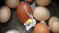 Viral Telur Rebus Cegah Corona, Warga Diminta Tak Panik Borong Telur