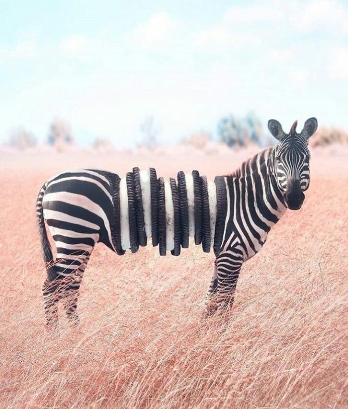 Jangan terkecoh saat lihat zebra ini. Ada tumpukan oreo yang diedit menyatu dengan tubuh zebra. Anda menemukan? Foto: Instagram @ronnaldong