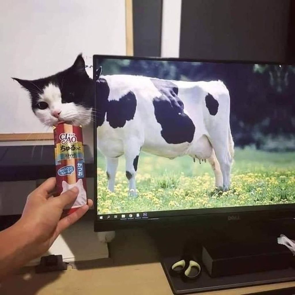 Ini kucingatau sapisih?(Foto: Via Brightside)