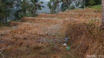 Kekeringan, 244 Hektare Padi di Banjarnegara Puso