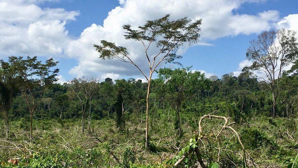Tiap Menit Hutan Seluas Lapangan Sepak Bola di Amazon Brasil Hilang