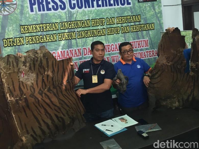 Jual Kulit Harimau, Pria di Langkat Sumut Ditangkap