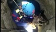 Aksi PMK Selamatkan Kucing Tercebur Sumur Sedalam 10 Meter