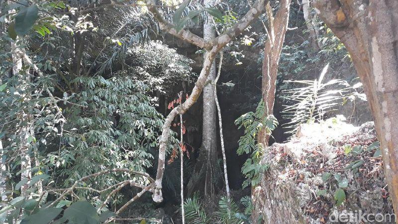 Lokasi Gua Gebang Tinatar ada di Dusun Panggang I, Desa Giriharjo, Kecamatan Panggang, Gunungkidul. Tersembunyi di antara lahan pertanian, gua ini terbilang masih sangat asri dan belum dikelola warga jadi tempat wisata (Pradito Rida Pertana/detikcom)