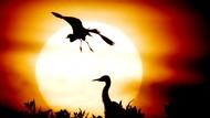 Matahari di Fase Lockdown, Bumi Disebut Terancam Berbahaya