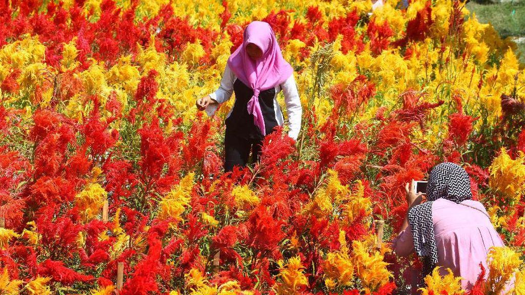 Indahnya Warna-warni Taman Bunga Soeratmo di Ngawi