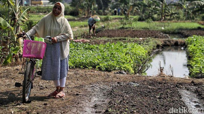 Kekeringan jadi salah satu problem yang harus dihadapi para petani saat memasuki musim kemarau. Tak terkecuali petani sayur di utara Jakarta.