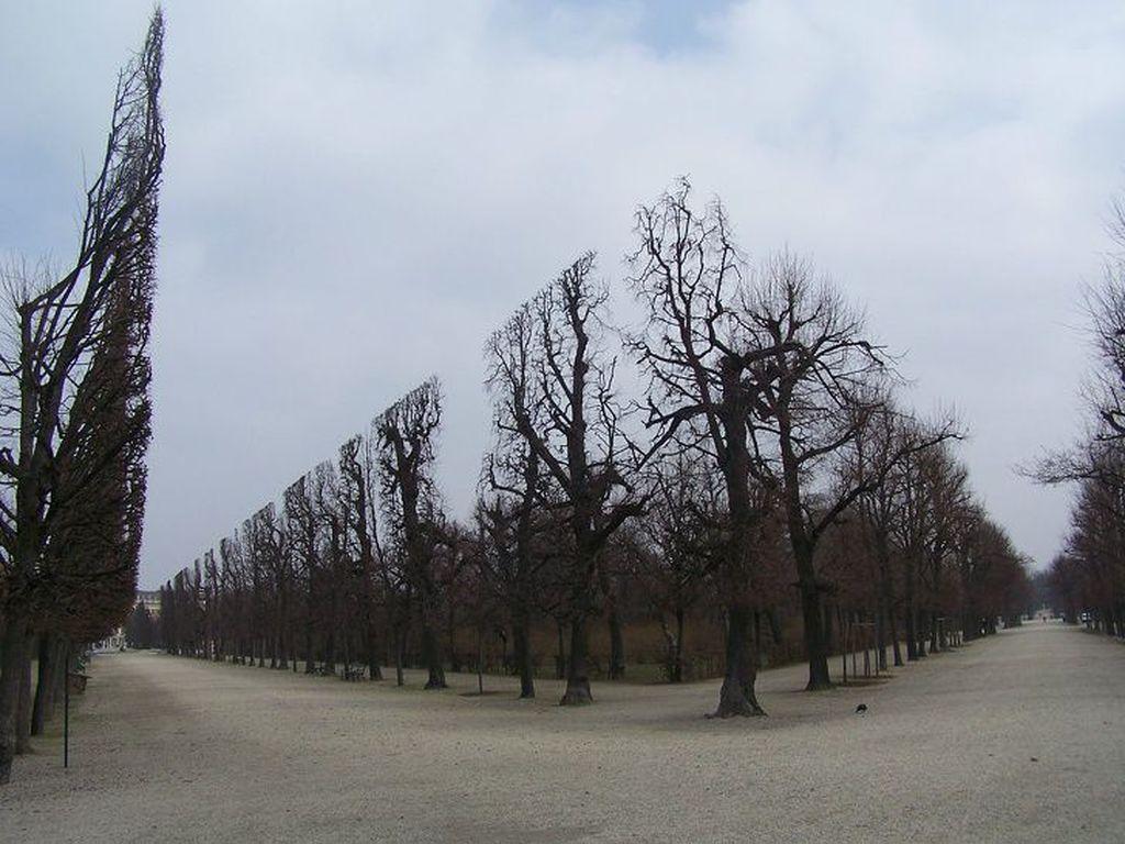 Gaya simetis pepohonan ini lebih pada perfeksionisme si tukang taman.(Foto: Via Brightside)