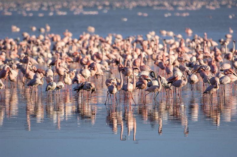 Pemandangan menarik dan unik dapat kamu lihat di Danau Nakuru. Kamu akan menemukan jutaan flamingo mencari makan di sini. (iStock)