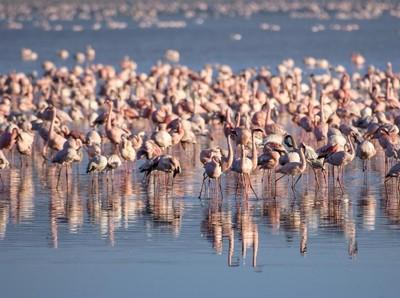 Foto: Danau yang Jadi Surganya Jutaan Burung Flamingo