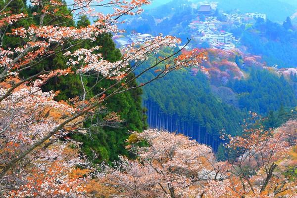 Bepergianlah ke daerah pedesaan di Gunung Yoshino, Nara untuk pengalaman yang berbeda. Traveler akan serasa kembali ke masa lalu, saat Jepang masih serba tradisional. (iStock)