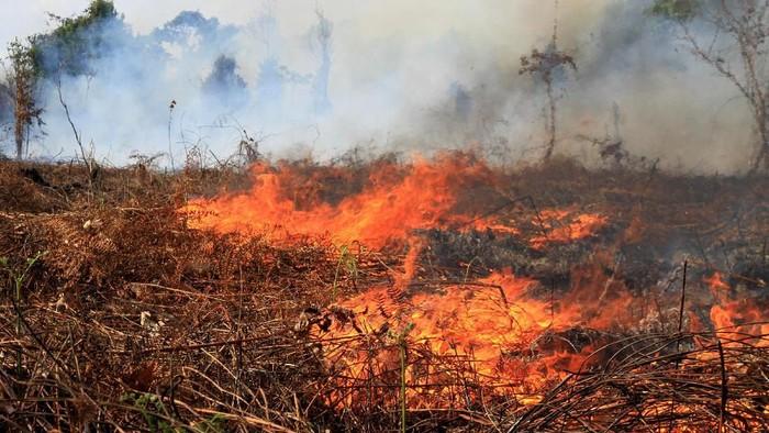 Kebakaran hutan di Aceh. (Foto: Antara Foto)