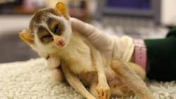 Pemeriksaan kesehatan hewan biasanya dilakukan untuk mencegah masuknya kuman dan virus sehingga manusia tidak tertular penyakit yang berasal dari hewan.