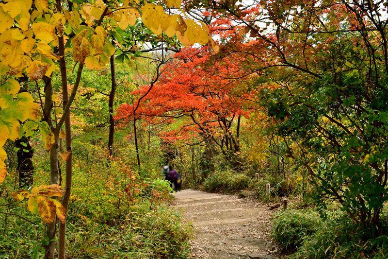 Pertama, ada Gunung Takao di Hachioji, Jepang. Lokasinya kurang dari satu jam dari pusat kota Tokyo. Cocok didaki buat kamu yang suka hiking. (iStock)